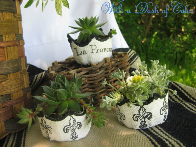 French Peat Pots with Succulents