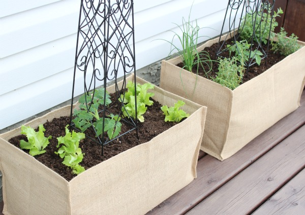 Kitchen Potager in Burlap Containers