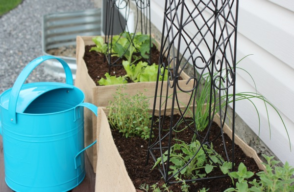 How to Plant a Kitchen Container Potager with Vegetables and Herbs in Burlap Container