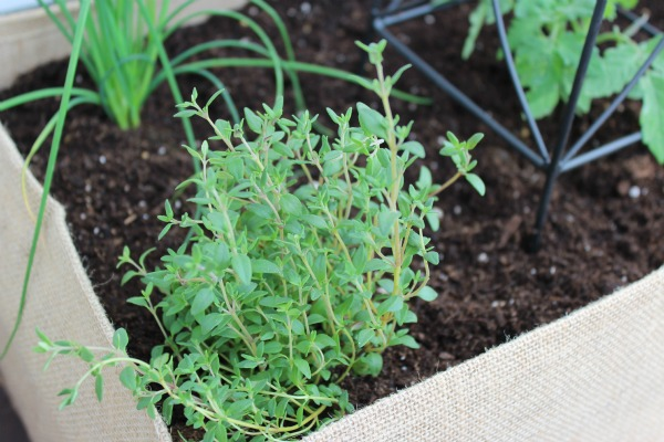 Burlap Container Herb Garden | Satori Design for Living