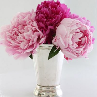Peony Flowers in a Mint Julep Cup - Teacher's Gift - Mother's Day Gift Idea - Julie Blanner