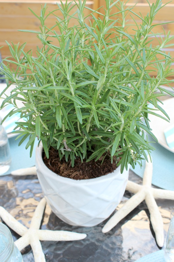Potted Rosemary as Table Centerpiece for Casual Summer Entertaining