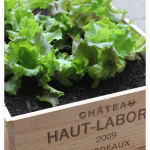 Container Garden in Wine Boxes