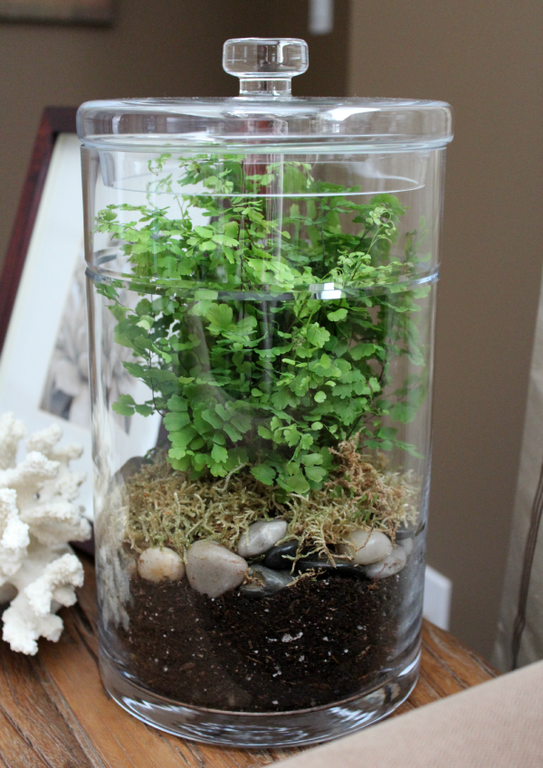 DIY Terrarium- supplies and step-by-step instructions