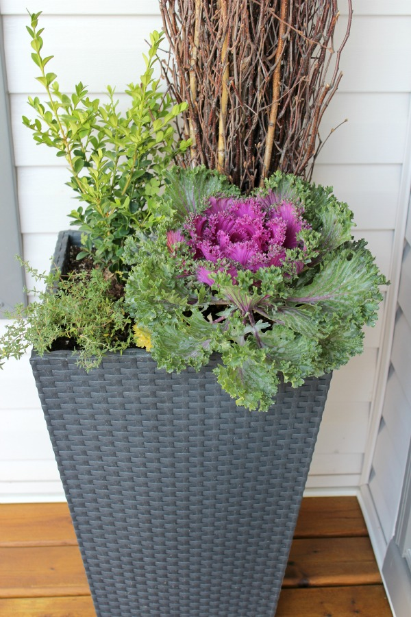 Fall Front Porch Decorating Ideas - Fall Planter With Boxwood, Ornamental Kale and Thyme