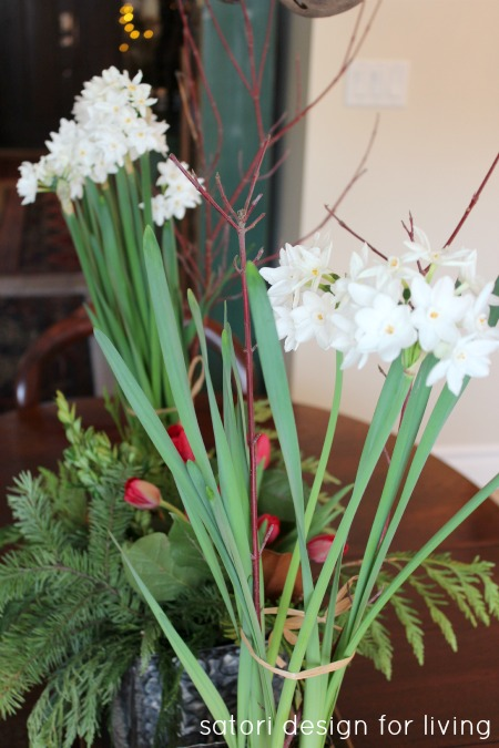 Christmas House Tour- Paperwhites
