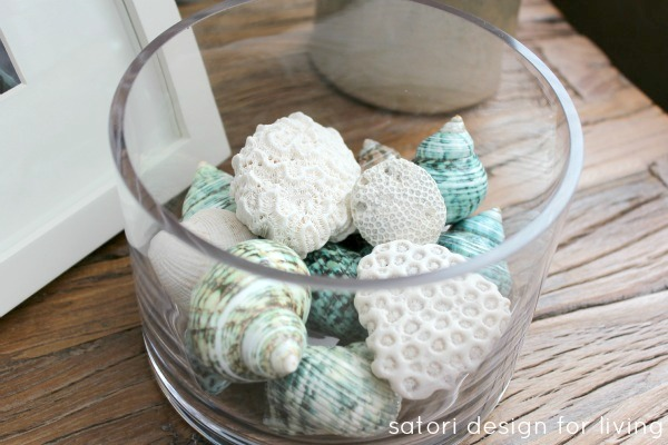 Sea Shells and Coral in Glass Cylinder - SatoriDesignforLiving.com