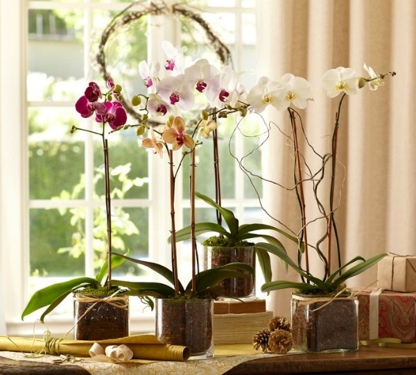 Ways to Decorate With Glass Cylinders - Potted Orchids - Pottery Barn