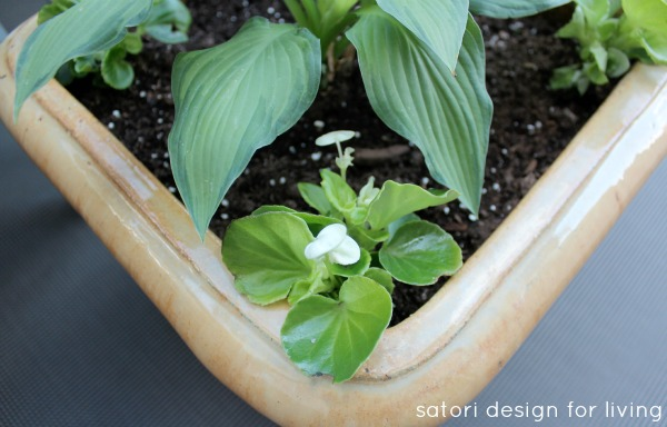 Hosta and Begonia in Yellow Glazed Planter - Satori Design for Living
