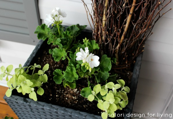 Simple Green and White Plants - Geranium and Limelight Container - Satori Design for Living