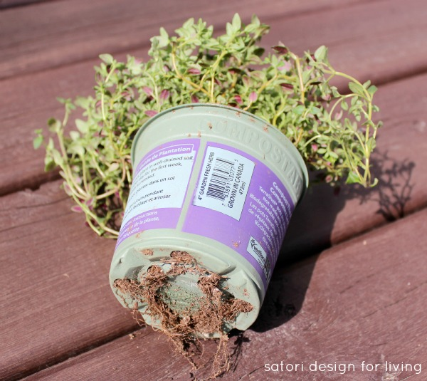 How to Plant a Strawberry Pot Herb Garden - Thyme