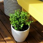 Yellow Bench with Potted Boxwood - Front Porch Decorating Ideas - Satori Design for Living