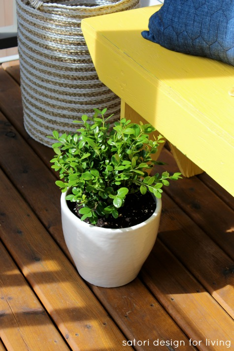 Yellow Bench with Potted Boxwood