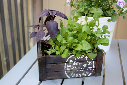 Salad Planter in Wooden Crate - Small Home Big Start