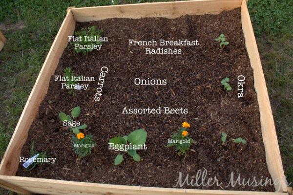 Raised Bed Vegetable Garden - Miller Musings