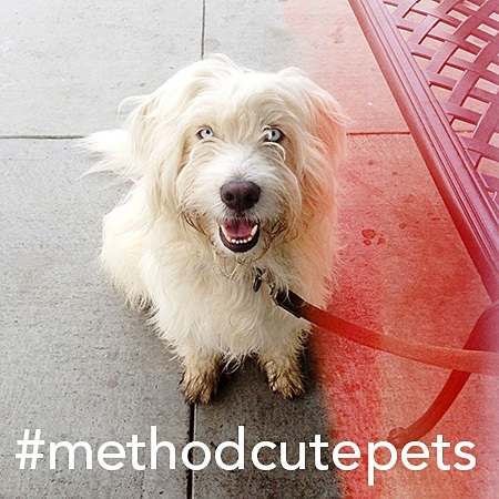 method pet photo contest