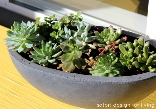 Gardening Tips - Caring for Outdoor Succulents - Satori Design for Living