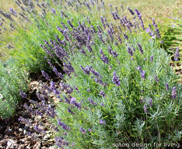 Lavender Garden - Satori Design for Living