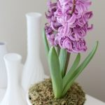 Potted Purple Hyacinth - Satori Design for Living