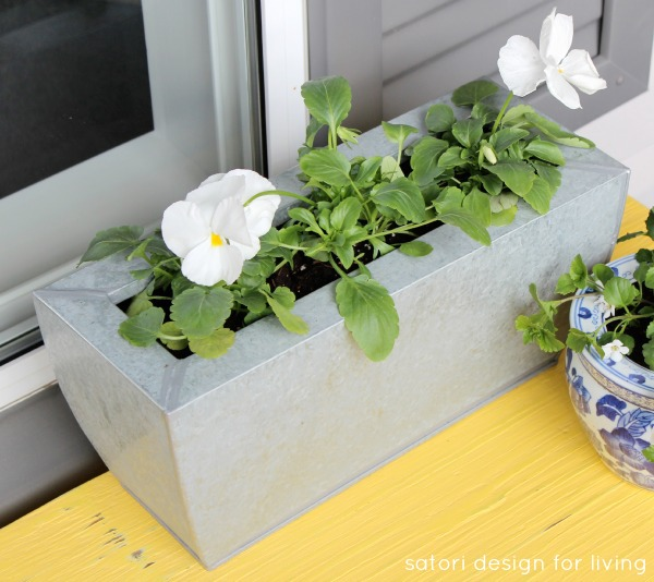 Cold Tolerant Annuals for Early Spring Planting - Pansies | satori design for living