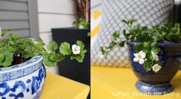 Cold Tolerant Annuals for Early Spring Planting - Bacopa | satori design for living