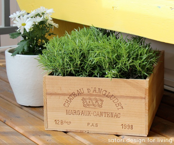 Cold Tolerant Herb for Early Spring Planting - Rosemary | satori design for living