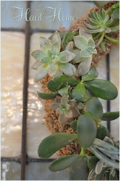 DIY Live Succulent Wreath