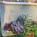 Garden Upcyling Project - Vintage Mail Box Planter with Succulents - Urban Patina