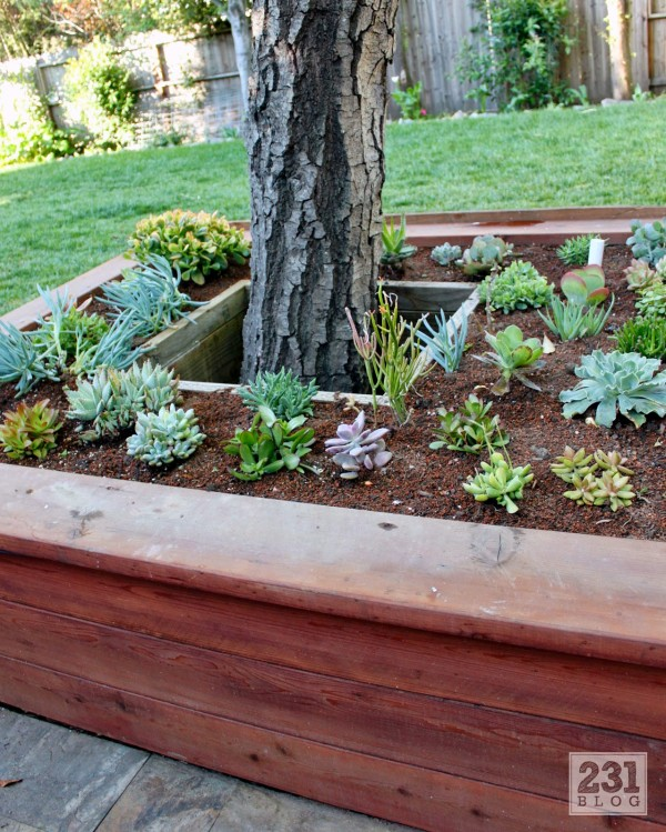 Raised Succulent Garden Around Tree