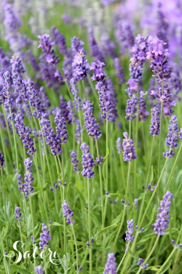 Lavender Garden | Satori Design for Living