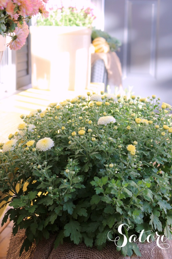 Decorating a Fall Front Porch with Yellow and Warm Pink Garden Mums - Satori Design for Living