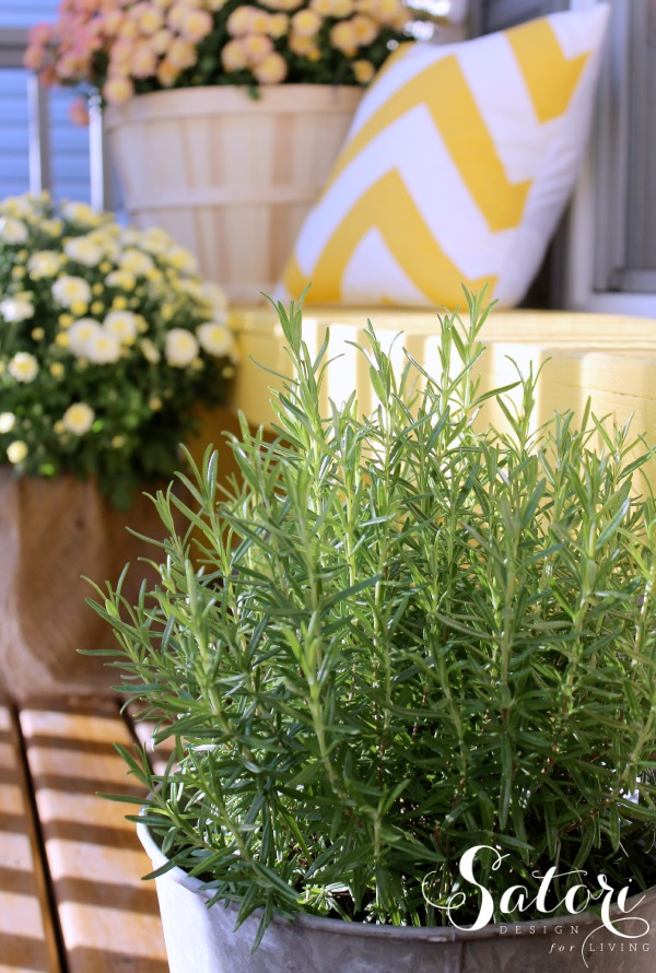 Fall Front Porch Decorating Ideas - Rosemary in a Vintage Tin Bucket - Satori Design for Living