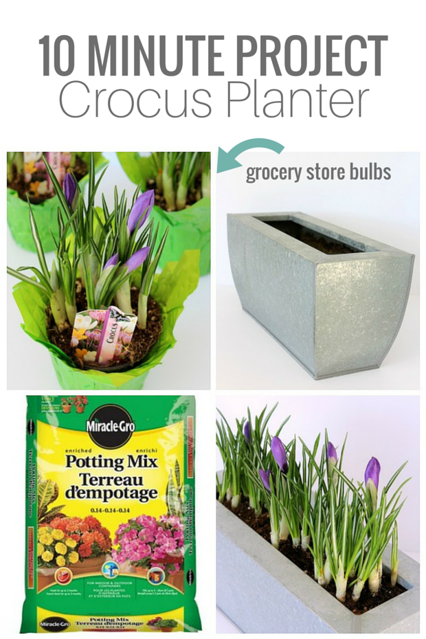 10 MINUTE PROJECT - Crocus Planter - Satori Design for Living