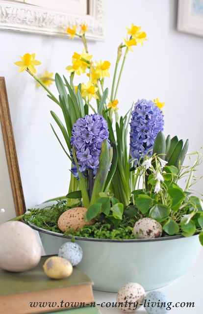 Spring Decorating Ideas Bulbs Arrangement By Town And