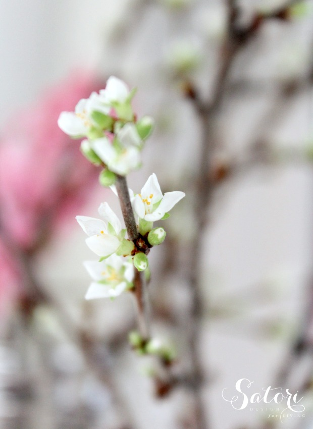 How to Force Branches to Bloom Indoors