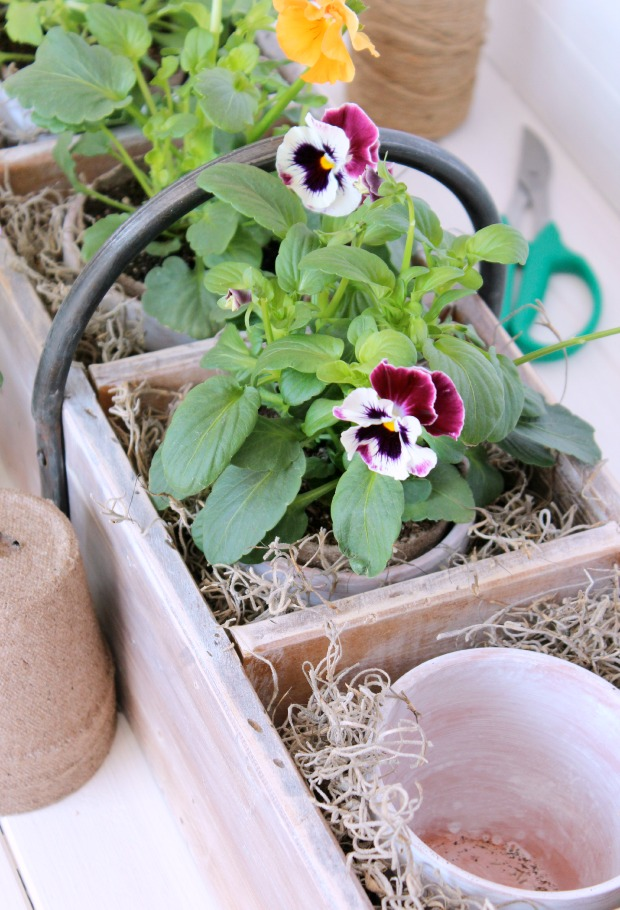 Vintage Tool Box Planter with Aged Terracotta Pots and Pansies - Satori Design for Living