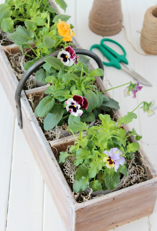 Vintage Tool Box Planter with Aged Terracotta Pots and Frizzle Sizzle Pansies | Satori Design for Living
