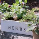 Vintage Tool Box Flower & Herb Planters   Satori Design for Living