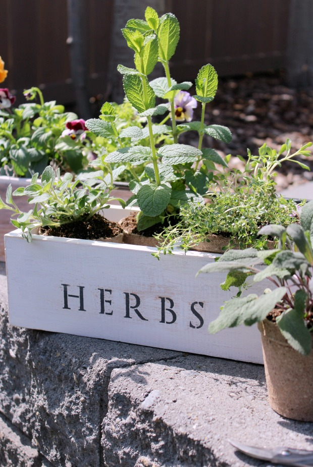 Vintage Tool Box Flower & Herb Planters | Satori Design for Living