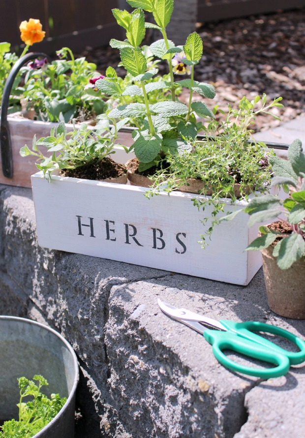 Vintage Tool Box Herb Planter | Satori Design for Living