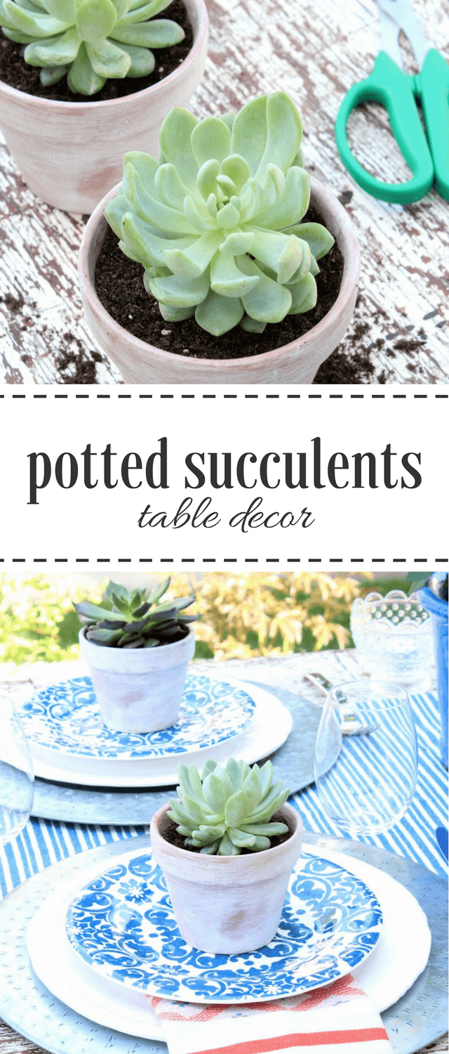 Potted Succulents - Outdoor Table Decorating Ideas - Satori Design for Living