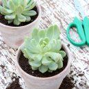 Potted Succulents - Quick Aged Terracotta Pots - Satori Design for Living