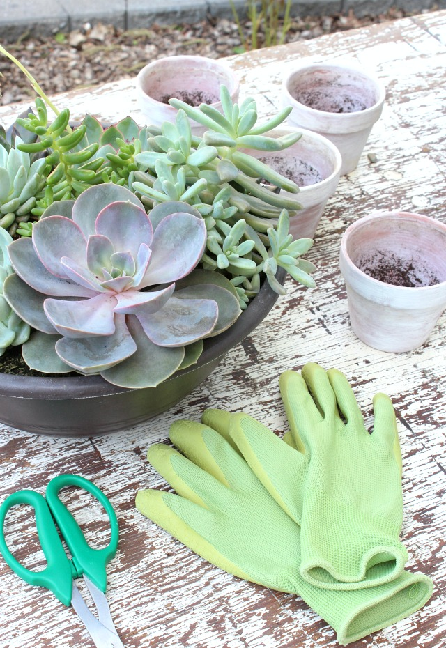 Mixed Succulent Planter - Tips for Repotting Succulents - Satori Design for Living