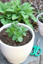 Fresh Mint: Garden to Table Recipes