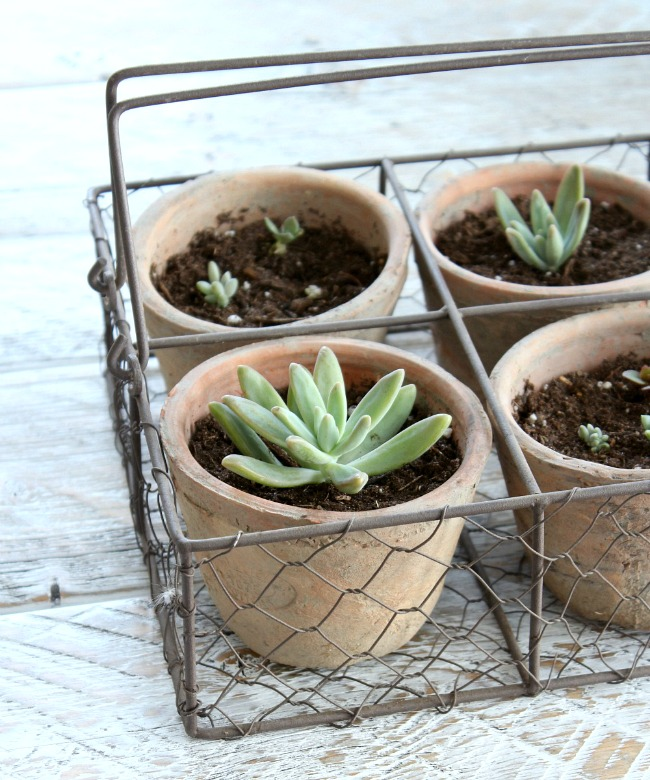 DIY Gardening Gifts   Robert And Stevens Potters Basket With Succulents