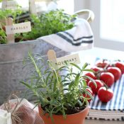 Potted Herbs with DIY Garden Markers - Gift Basket Idea