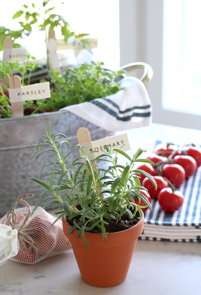 Potted Herbs with DIY Garden Markers - Gift Basket Idea for the Foodie or Gardener