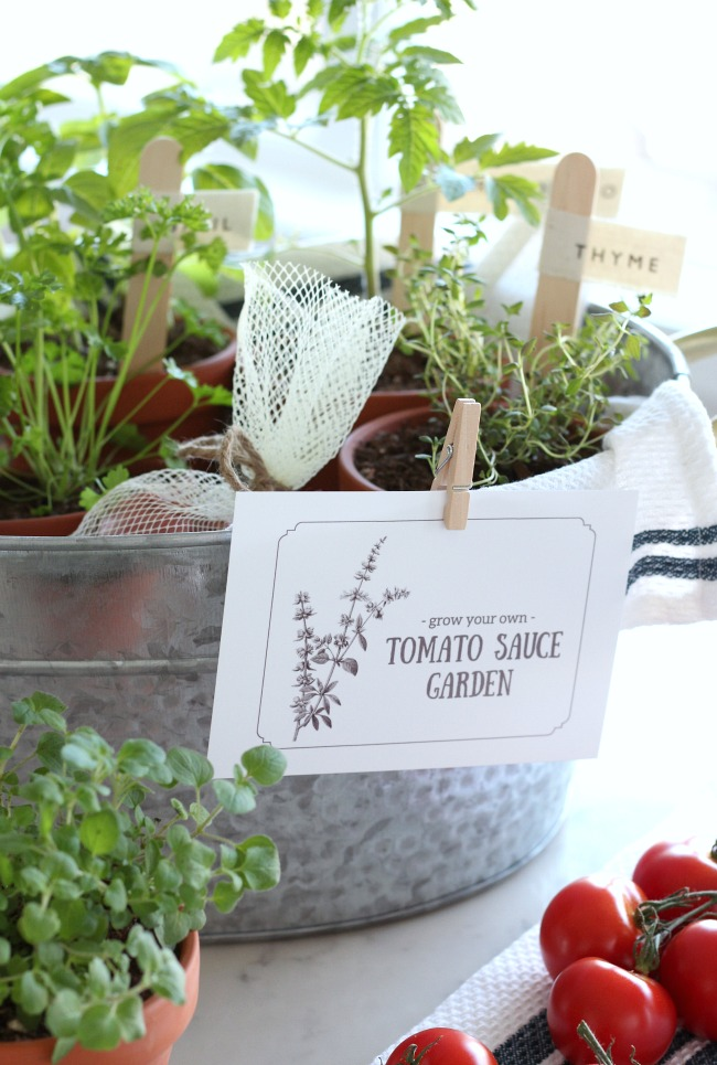 Plant a Tomato Sauce Garden - Gift Basket for Mother's Day, Father's Day or Any Other Spring or Summer Occasion