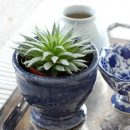 See how I put together this easy table centerpiece using thrift shop finds. The succulent plant and indigo blue decor are perfect for welcoming Spring!