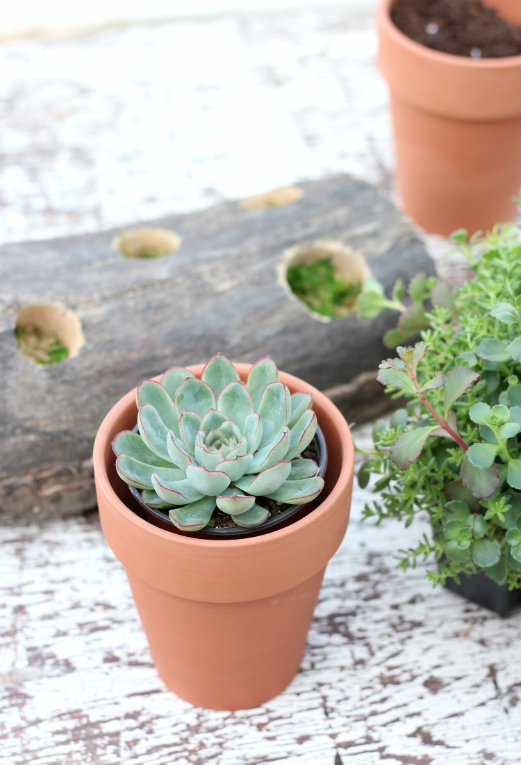 How to Make a Log and Succulent Centerpiece - DIY Outdoor Decor - Satori Design for Living